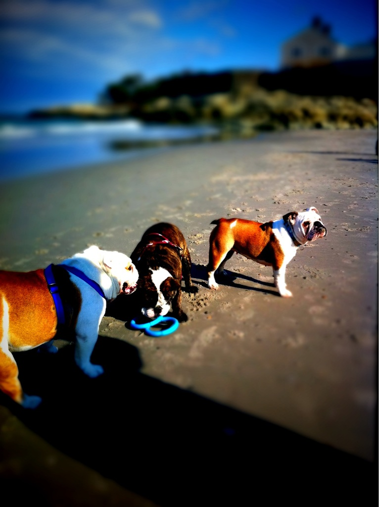 Beautiful Bullies @ The Beach in Cohasset, MA